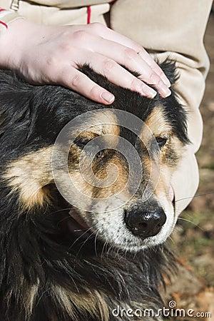Petting собаки содружественный