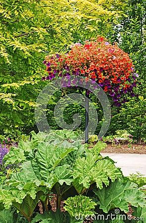 Petunia garden