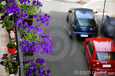 Petunias on balcony
