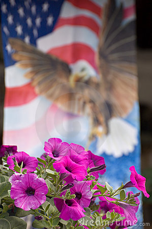 Petunias with flag background
