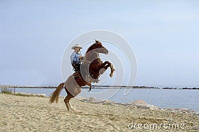 Pferd im Strand