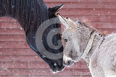 Pferd und Esel