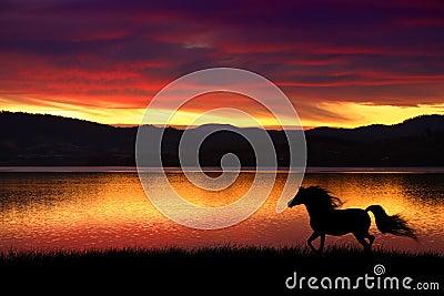 Pferd und Sonnenuntergang