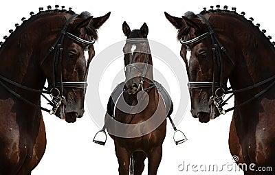 Pferde getrennt auf Weiß