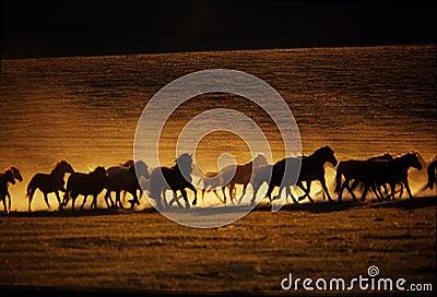 Pferden-Laufen