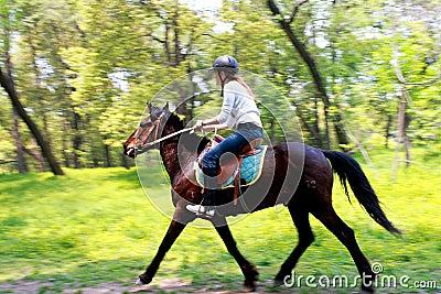 Pferdenmitfahrer