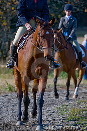 Pferdenmitfahrer in der Landschaft