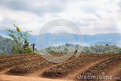 Pflanzen von Feldern