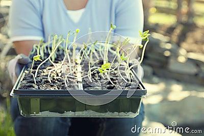 Pflanzen von Jahreszeit