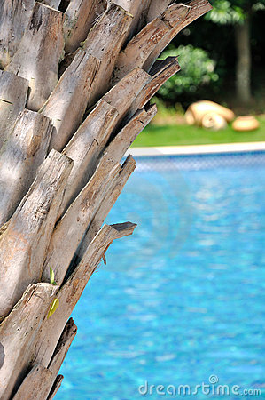 κολυμπώντας δέντρο λιμνών &ph