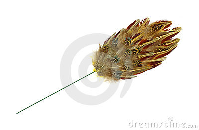 Pheasant feather home accent decoration
