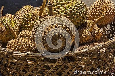 hanging fruit basket durian fruit
