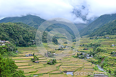 Philippines, rice terraces in the valley Hapao