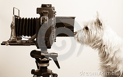 Pho Dog Grapher at work in photography studio