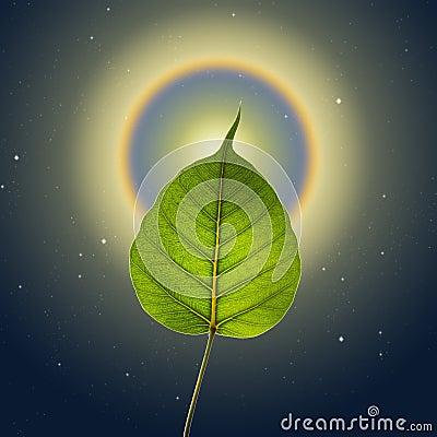 Free Pho Or Bodhi Royalty Free Stock Image - 29727476