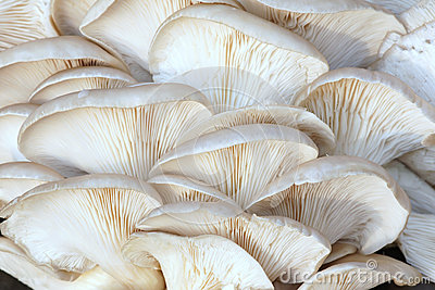 Phoenix mushroom