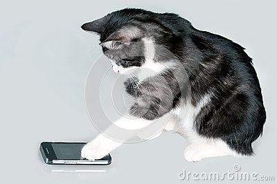 Phoning cat
