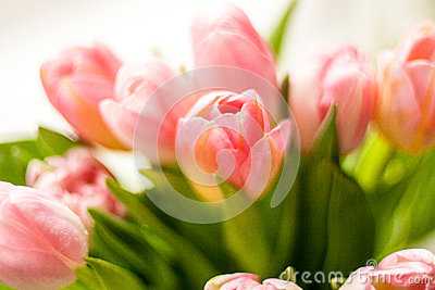 Photo of bunch of red tulips