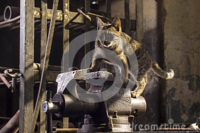 Cat in the machine