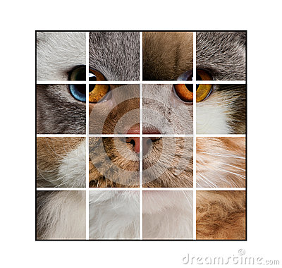 Free Photo Composition Of A Cat S Head Made With Various Cats Royalty Free Stock Photography - 40413967