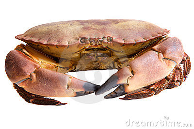 Photo of edible crabs