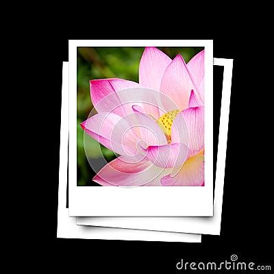 Free Photo Frame Of Lotus Flower Isolated On Black Background Stock Photography - 46376002