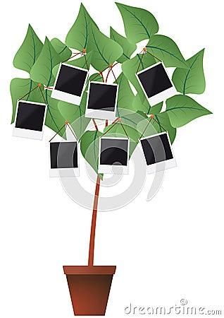Photo frame plant