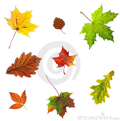 Photo of maple autumn leave isolated on white