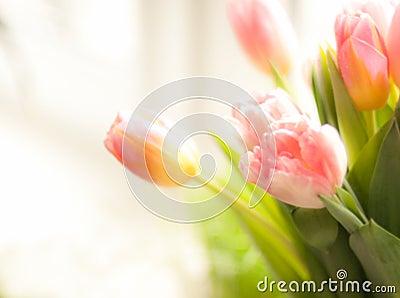 Photo of pink tulips standing on windowsill