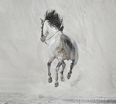 Free Photo Presenting The Galloping Horse Royalty Free Stock Photos - 42211718