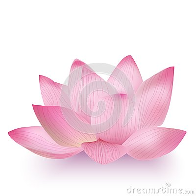 Free Photo-Realistic Lotus Flower Royalty Free Stock Images - 34290239