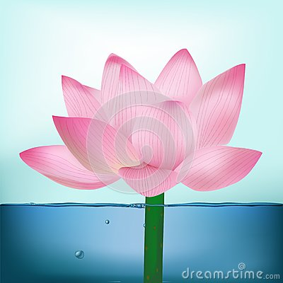 Free Photo-Realistic Lotus Flower In Water Royalty Free Stock Photography - 34295917