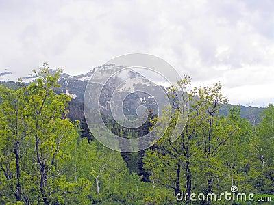 View of Utah Mountain