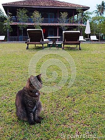 Cat on garden lawn