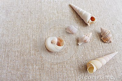 Seashells on linen background still life