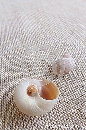 Seashells on linen background still life