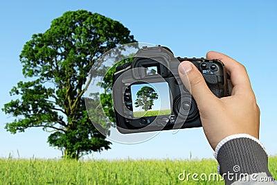 Photographer  photographing landscape