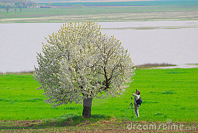 Photographer photographing spring tree