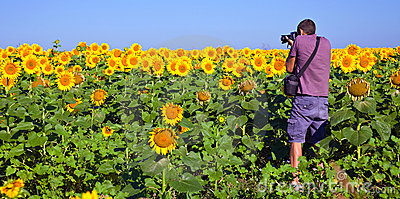 Photographer in a Sunflower Field