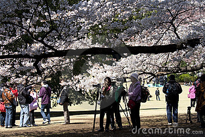 Photographers during Hanami in Tokyo Editorial Photography