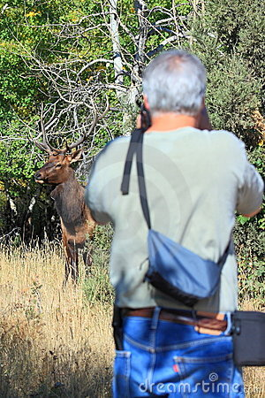 Photographing Elk Editorial Stock Photo