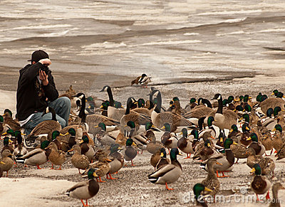 Photographing waterfowl