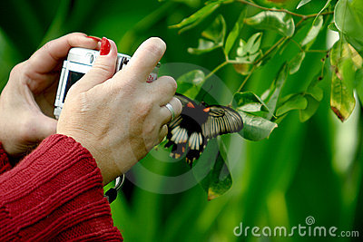 Photographing woman in the butterfly garden