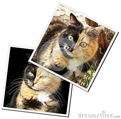 Photos of a cats