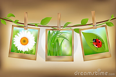 Photos With Nature Image. Vector