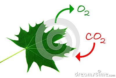 Photosynthesis 2