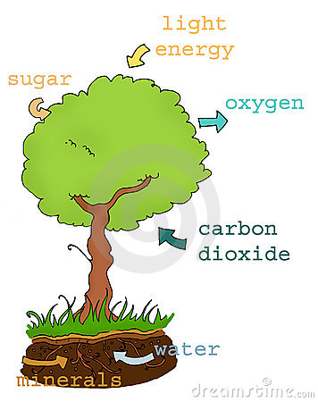 Photosynthesis plan text