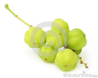 Phyllanthus acidus or Orboroi fruit