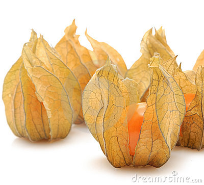 Free Physalis Royalty Free Stock Photo - 4581505
