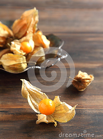 Free Physalis Fruit Royalty Free Stock Images - 28472669